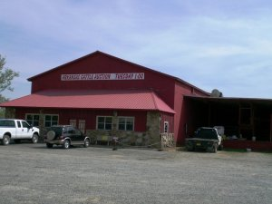Arkansas Cattle Auction